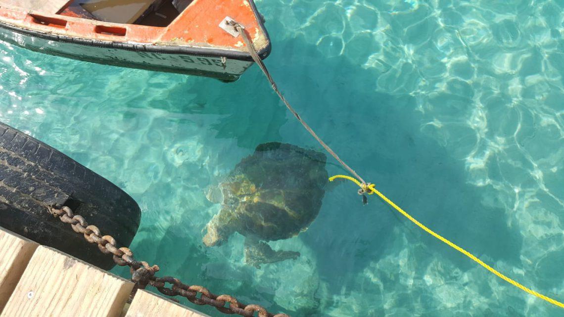 schildpad en boot curacao